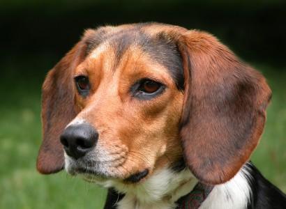 Zašto psi jedu travu?